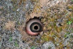 Spy hole Royalty Free Stock Photos