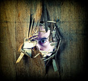 Spy from the hole. Broken grunge wood and caucasina man portrait looking Stock Image