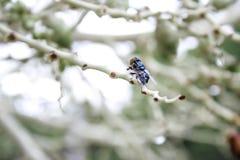 Spyflugor kadaver, knä flyger royaltyfri bild