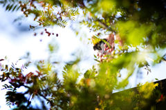 Spying cat. The cat spying through the branches of the tree Stock Photography