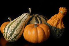 Sqash. Colorful squash and pumpkins on a black background royalty free stock image