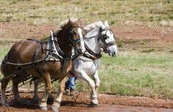 Squadra di cavalli immagini stock