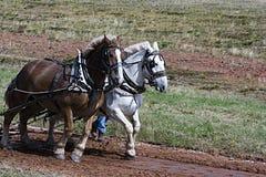 Squadra di cavalli fotografie stock
