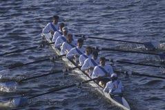 Squadra di Rowers maschii, Immagini Stock Libere da Diritti