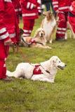 Squadrone del cane di salvataggio Immagini Stock