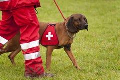 Squadrone del cane di salvataggio Fotografie Stock