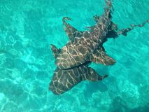 squali Immagine Stock Libera da Diritti