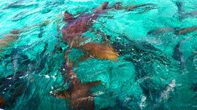 squali immagini stock