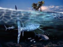 Squali che si avvicinano al litorale Fotografia Stock Libera da Diritti