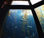 Squali e pesce Fotografie Stock