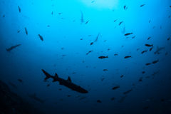 Squali e pesce che istruiscono in acqua profonda Fotografia Stock Libera da Diritti