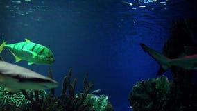 Squali gatto nell'acqua blu archivi video