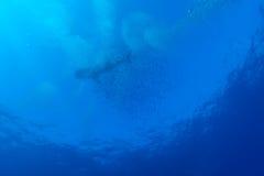 Squalo balena con la scuola dei pesci, largo di Cayo Fotografia Stock Libera da Diritti