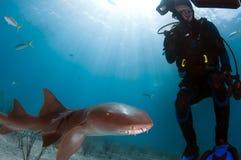 Squalo di infermiera con l'operatore subacqueo Fotografia Stock Libera da Diritti