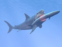 Squalo di Megalodon che mangia balena blu - 3D rendono Fotografie Stock Libere da Diritti
