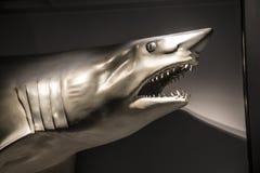 Squalo falso al museo di storia naturale, Boston, Massachusetts di Harvard fotografia stock