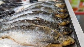 Squalo iridescente, pesce gatto a strisce, pesce gatto di Sutchi su ghiaccio Immagine Stock