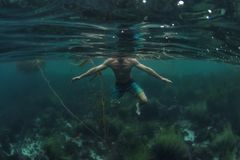 Squalo P O V del nuotatore che sta a galla in acqua bassa dell'oceano immagine stock libera da diritti