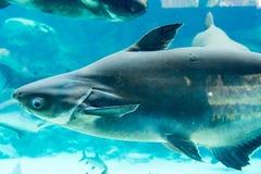 Squalo, stingray ed altri pesci nel mare subacqueo di Singapore Immagine Stock Libera da Diritti