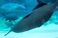 Squalo, stingray ed altri pesci nel mare subacqueo di Singapore Fotografia Stock Libera da Diritti