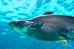 Squalo, stingray ed altri pesci nel mare subacqueo di Singapore Immagini Stock Libere da Diritti