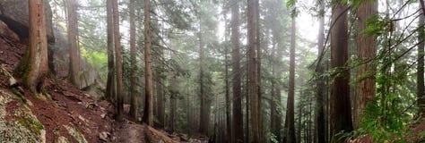 Squamish森林 免版税库存图片