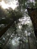 Squamish-Wald Lizenzfreie Stockbilder
