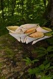 Squamosus Polyporus гриба, растя на дереве (Polyporus Squamosus) Стоковые Изображения