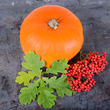 Square autumn composition Royalty Free Stock Photos