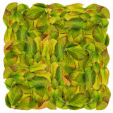 Square from autumn leaves Stock Photography
