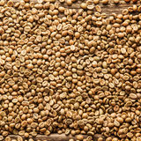 Square background of raw coffee beans. Square closeup background texture of raw brown Arabica or Java coffee beans rich in caffeine, a natural stimulant Royalty Free Stock Images