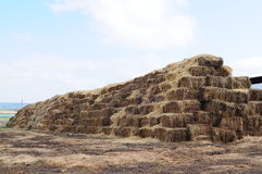 Square bales Royalty Free Stock Images
