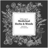 Square banner with chalk illustrations of medicinal herbs and flowers. On dark background, vector vintage sketch,  echinacea, chamomile, lavender, calendula Royalty Free Stock Image