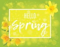 Square banner with daffodils on the corners. Hello spring Stock Image