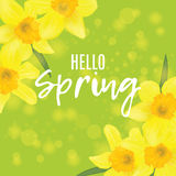 Square banner with daffodils on the corners. Hello spring Royalty Free Stock Photography