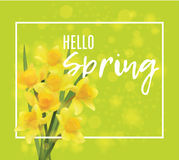 Square banner with daffodils.  Hello spring Stock Photos