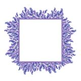 Square banner with lavender flowers, with space for writing. Wat. Watercolor flowers of lavender. Square frame for the inscription.Purple foil. The basis for the stock illustration