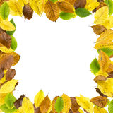 Square border frame of autumn leaves Royalty Free Stock Photography