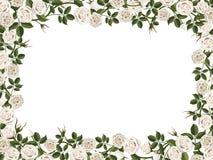 Square border of white roses Stock Photo