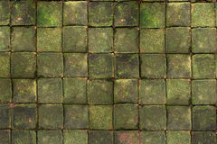 Square brick with the moss on top. Pattern of square brick with the green moss on top Stock Photography