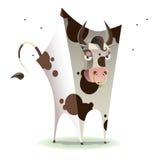 Square bull Stock Photos