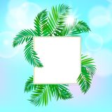 Square card with palm leaves Royalty Free Stock Photography