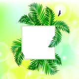 Square card with palm leaves Royalty Free Stock Images