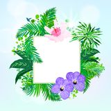 Square card with tropical decor Stock Images