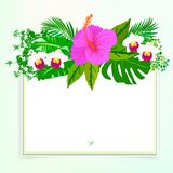 Square card with tropical decor Stock Photo