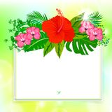 Square card with tropical decor Stock Photos