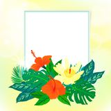 Square card with tropical decor Royalty Free Stock Image