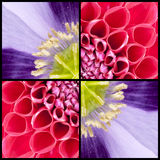 Square collage of Dahlia and Poppy Royalty Free Stock Photos