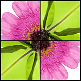 Square collage of fern and Gerbera Royalty Free Stock Photography