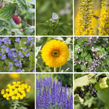 Square Collage of summer scenes: plants, fruits, insects Royalty Free Stock Photos